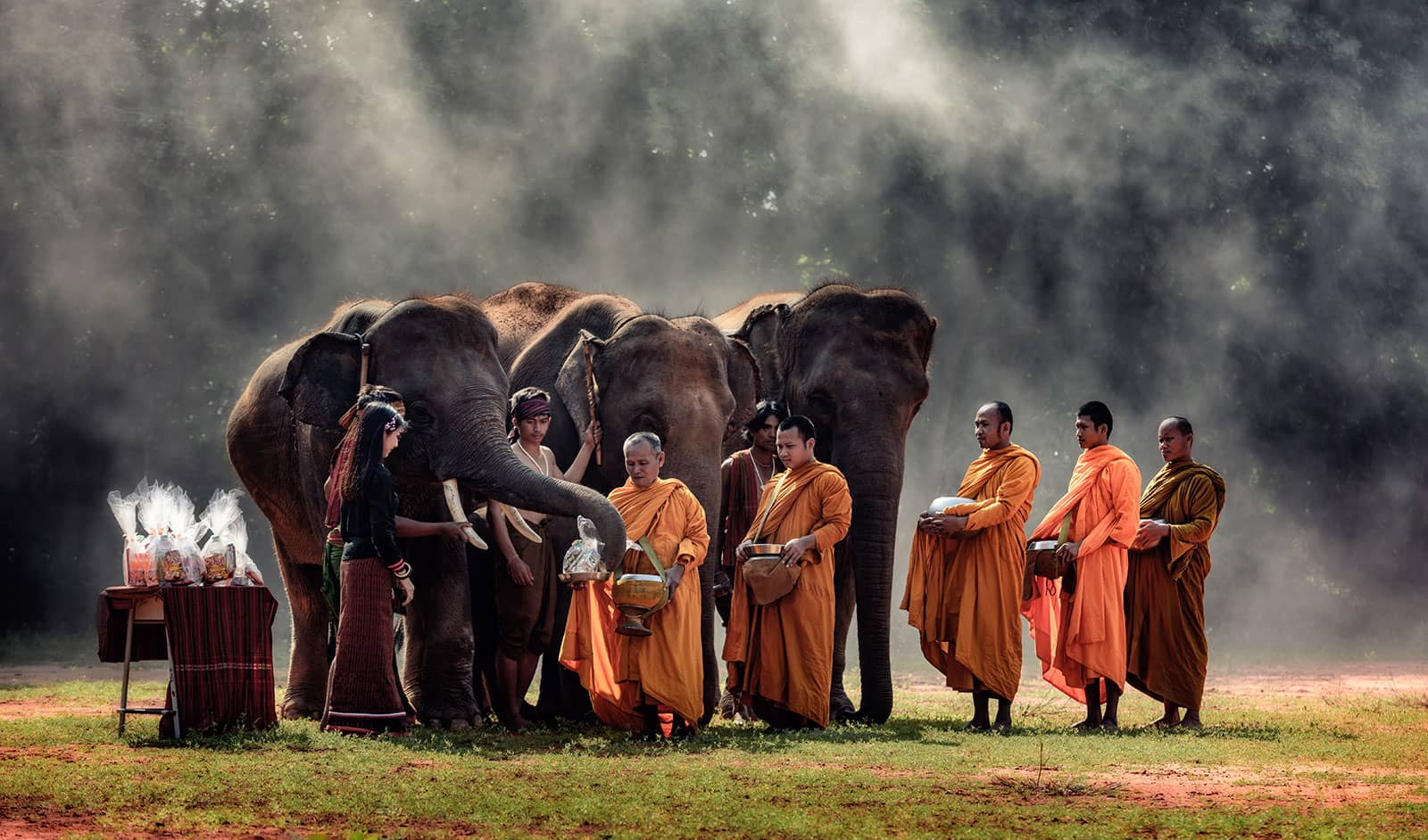 Young elephant with Monk