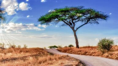 renting a car in Namibia